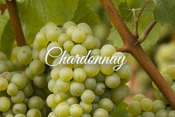 Variedades de uva clara: Chardonnay