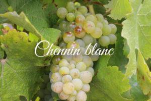 Variedades de uva clara: Chennin_blanc