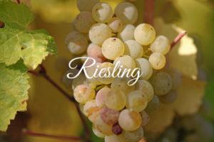 Variedades de uva clara: Riesling