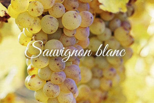 Variedades de uva clara: SuavignonBlanc