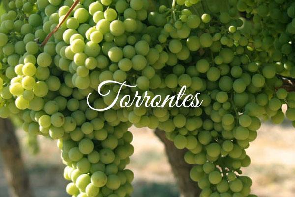 Variedades de uva clara: Torrontes