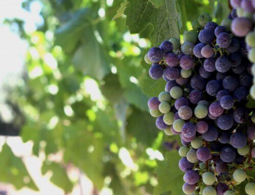 ¿Qué son los viñedos singulares?